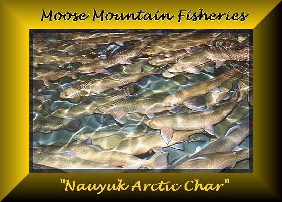 Moose Mountain Fisheries!